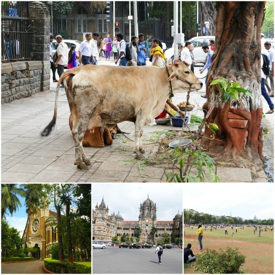 Scenes of Mumbai - including cows, the Tower Clock, Victoria Station and the Oval where Mr. O was desperate to make friends and join one of the 1000 cricket matches going on.