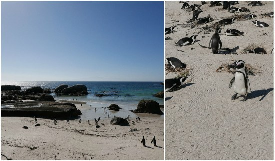 Luxury trip to Cape Town South Africa - Boulders Beach Penguins