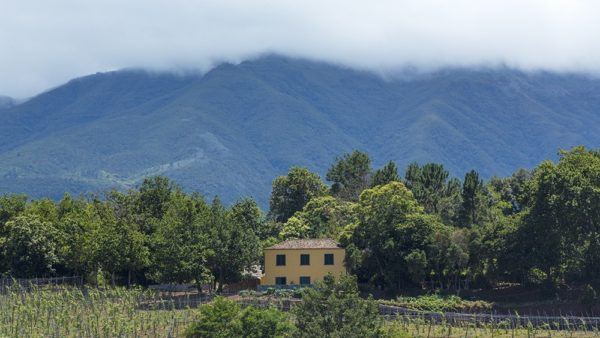 Madeira Wine Guide Quinta do Bispo - on the north of the Island